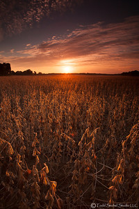 Soy Bean Sunrise - Sep292012_9826 - Vermilion, Ohio