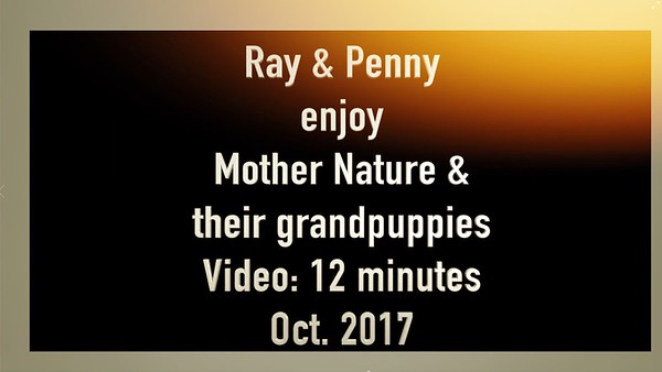 Video:  12 minutes ~~ Ray's camera is on the move.  Cleveland, OH.  Oct. 2017     ;