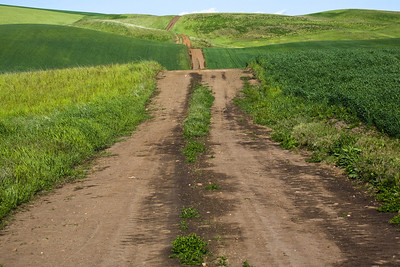 Primitive Palouse road:  winding, hilly, and unpaved.