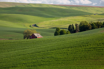 Typical Palouse scene:  Rolling hills, barn, winding roads, and beautiful blue sky with billowy clouds.