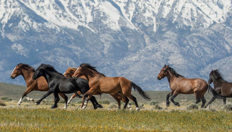 Carson Valley, Nevada Wild Horses