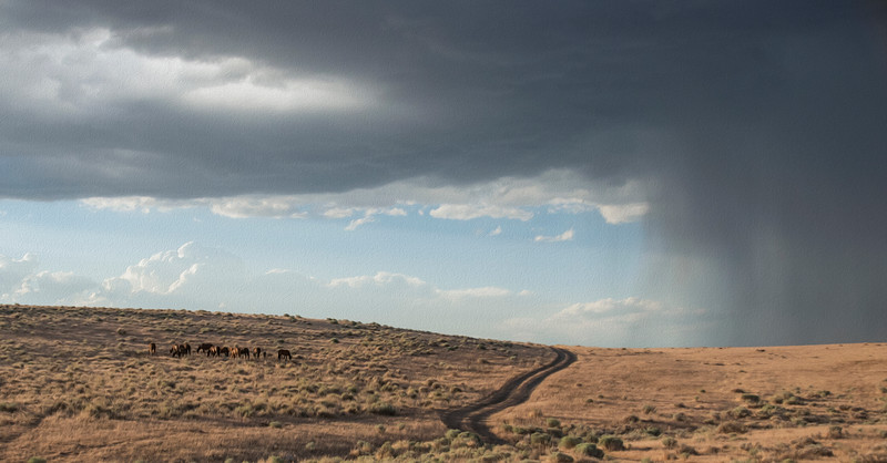 Summer Storm - Carson Valley Nevada Wild Horses