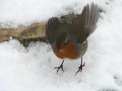 oiseaux en hiver