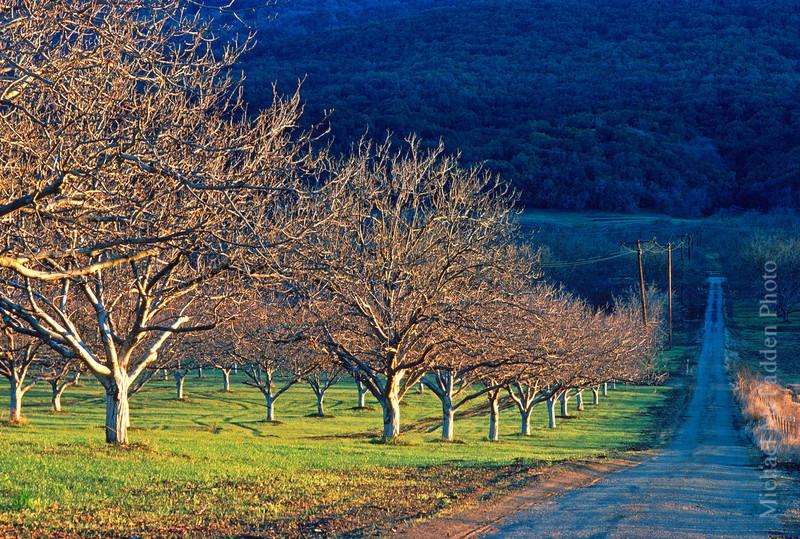 walnut grove late afternoon