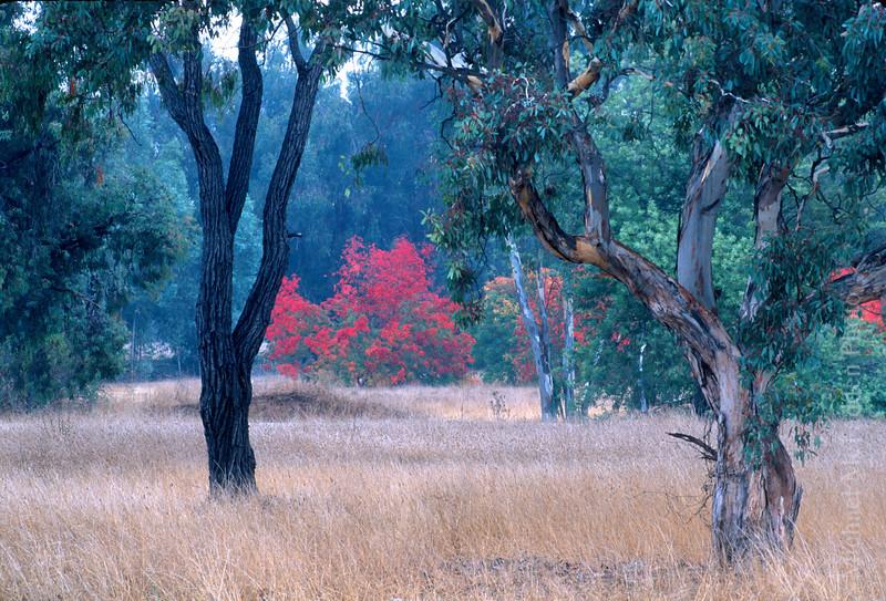ojai meadows