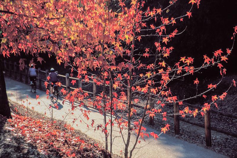 bike trail fall color4-2