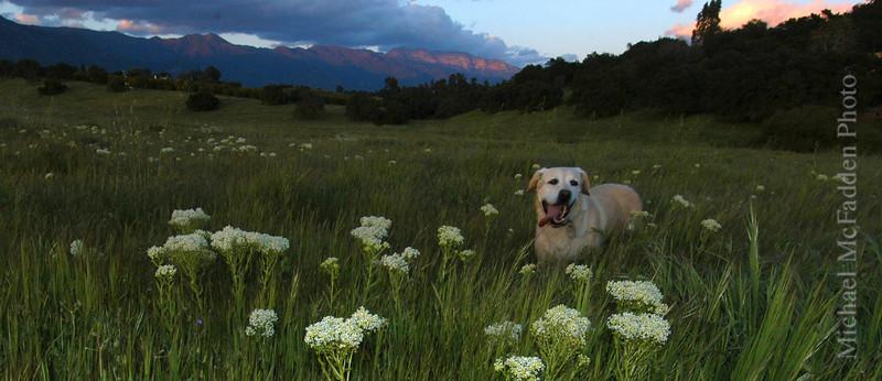 molly in field