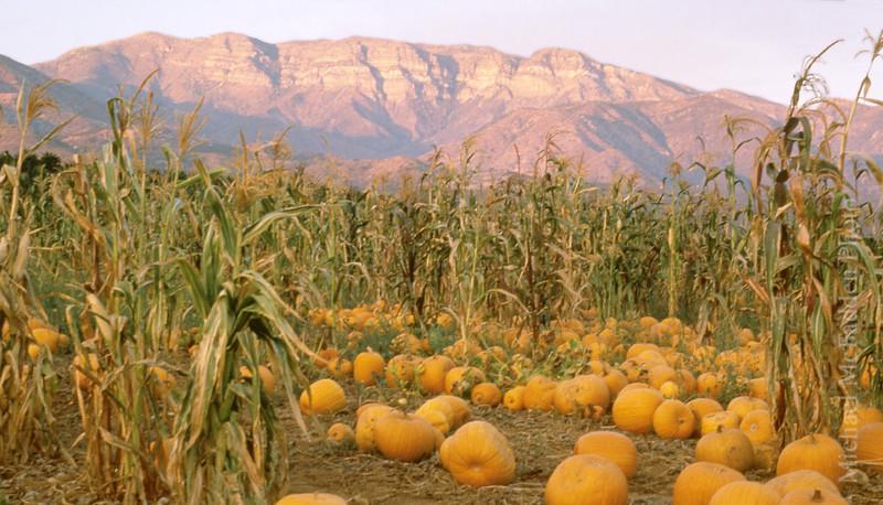 Pumpkins fall color Ojai Valley  Color of Ojai   , Light & Spirit