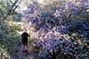 ceonothus walk