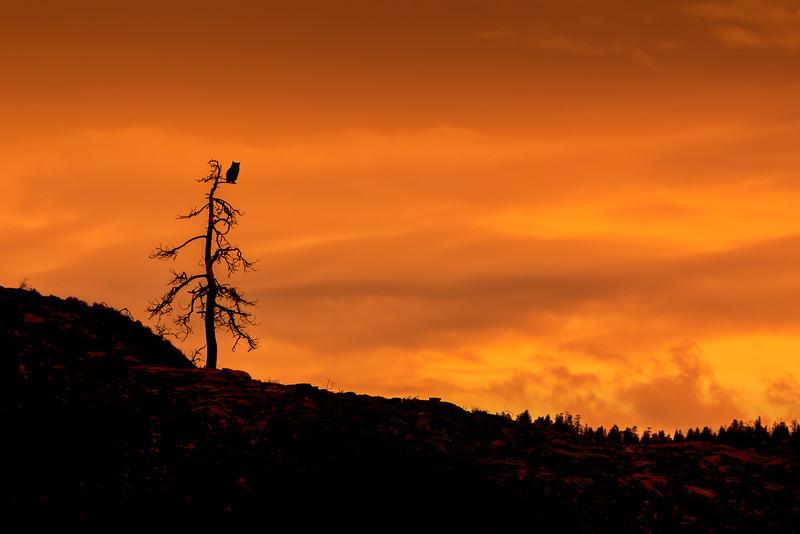 Vaseux Bluffs - Golden Hour Owl's Perch
