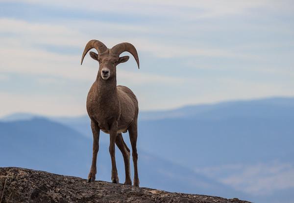 Carmi Ram