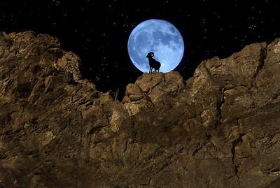 Blue Hour Bighorn
