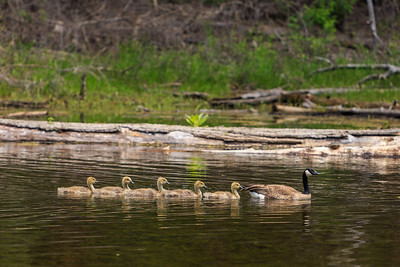 Twin Lakes - Follow The Leader