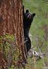Tree Hugger, Moses Meadow