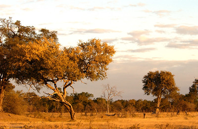 Hwange National Park at Dusk