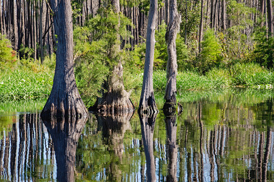 Reflections in the Oke at Stephen Foster State Park