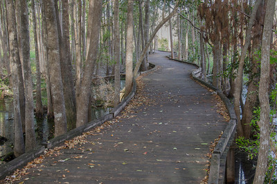 Boardwalk through the Land Of The Trembling Earth