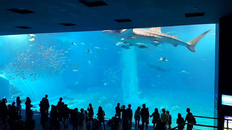 Churaumi Aquarium Okinawa