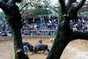 Combat de taureaux dans une arène du village de Nakijin. Ile d'Okinawa/Japon