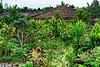 Jardin de la maison Uezuke datant de 1750 (plus vieille habitation de l'archipel d'Okinawa) à Kume-jima. Ile de Kume/Archipel d'Okinawa/Japon