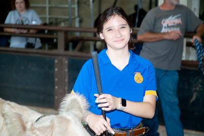 ok_state_fair_20190914_cattle-3
