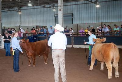 ok_state_fair_20190914_cattle-13