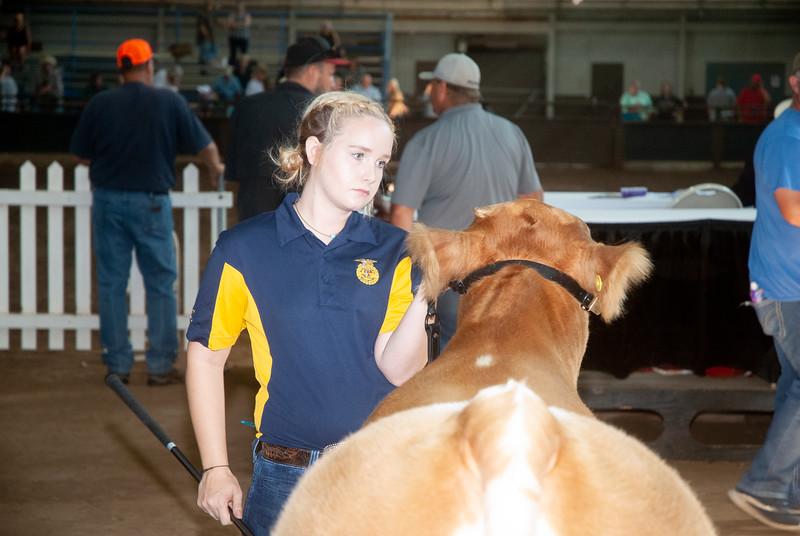 ok_state_fair_20190914_cattle-2