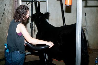 ok_state_fair_20190914_cattle-19