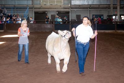 ok_state_fair_20190914_cattle-8