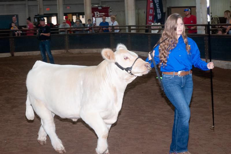 ok_state_fair_20190914_cattle-7