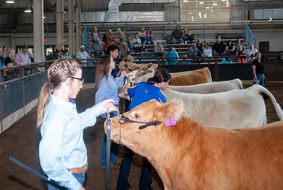 ok_state_fair_20190914_cattle-10