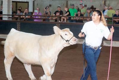 ok_state_fair_20190914_cattle-4