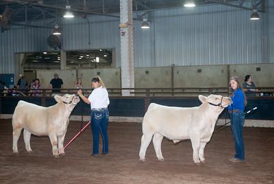 ok_state_fair_20190914_cattle-6