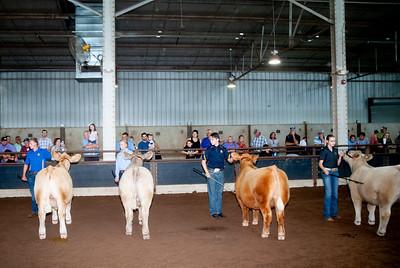 ok_state_fair_20190914_cattle-16