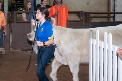 ok_state_fair_20190914_cattle-9