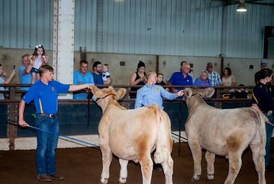 ok_state_fair_20190914_cattle-15