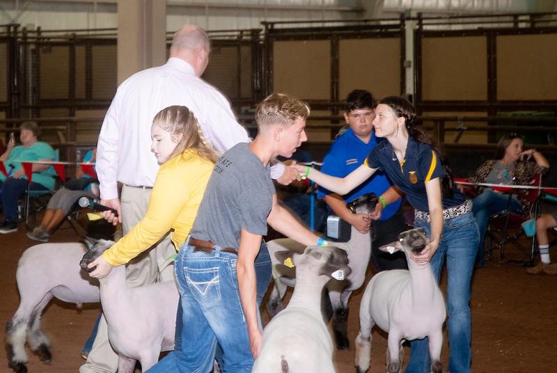 ok_state_fair_20190914_lambs-13
