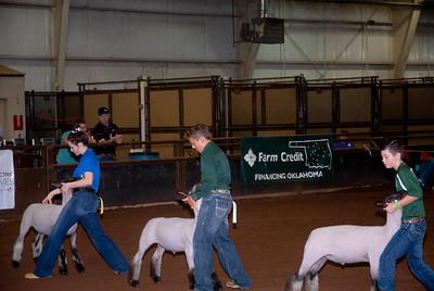 ok_state_fair_20190914_lambs-5