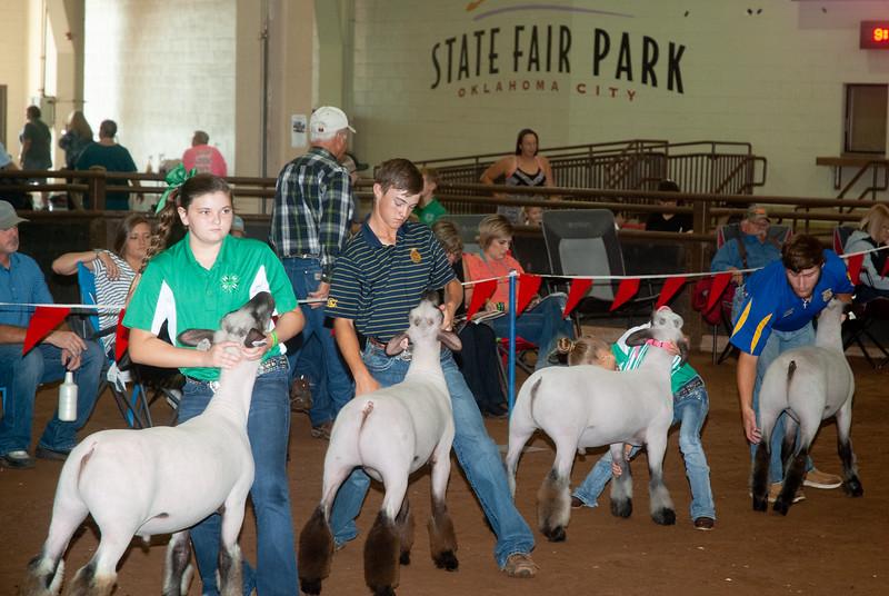 ok_state_fair_20190914_lambs-21