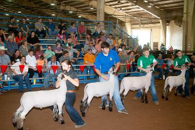 ok_state_fair_20190914_lambs-22