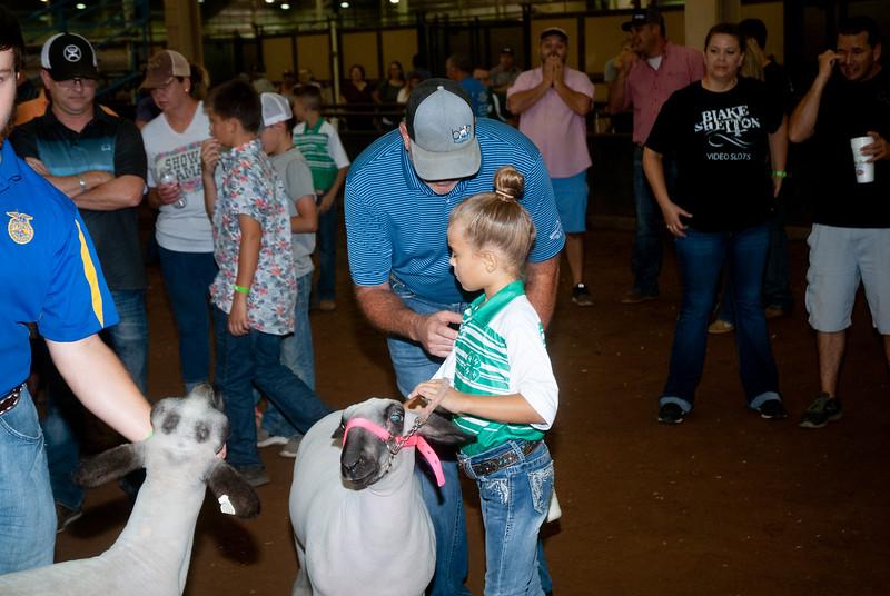 ok_state_fair_20190914_lambs-10