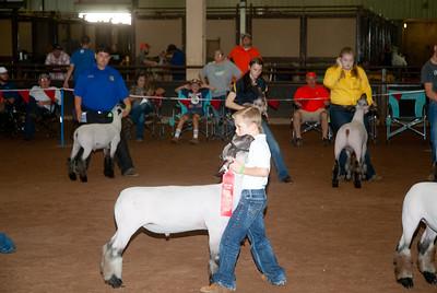 ok_state_fair_20190914_lambs-8