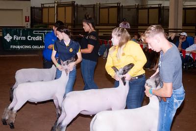 ok_state_fair_20190914_lambs-1