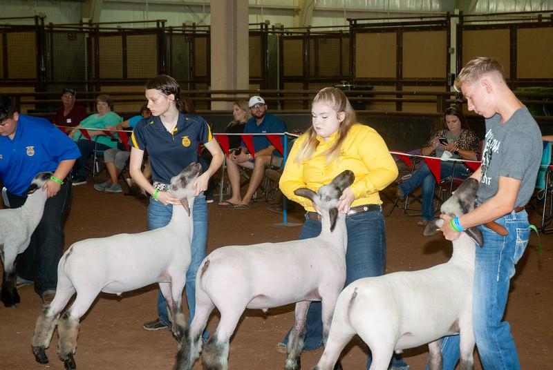 ok_state_fair_20190914_lambs-11