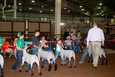 ok_state_fair_20190914_lambs-18