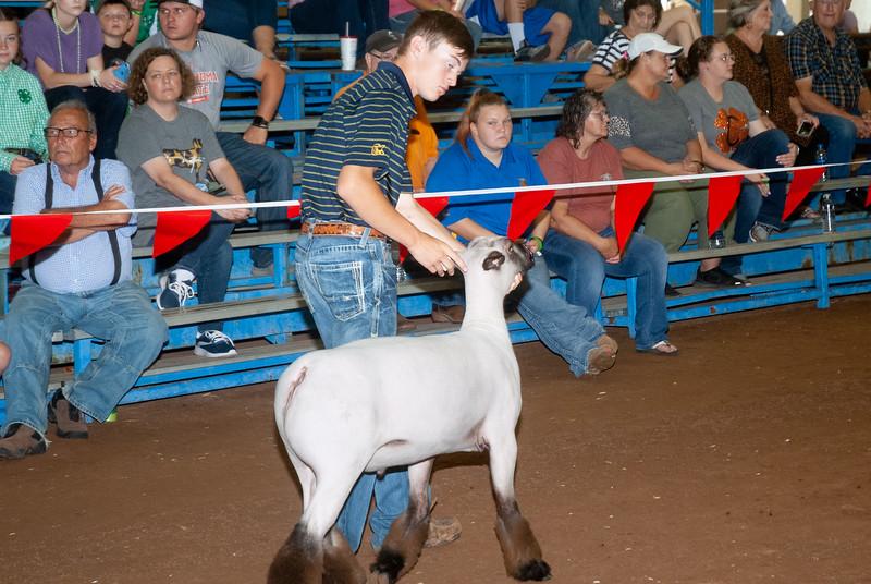 ok_state_fair_20190914_lambs-15