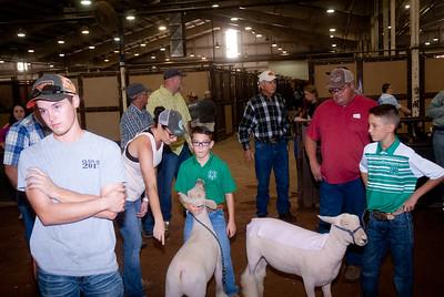 ok_state_fair_20190914_lambs-20