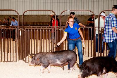 ok_state_fair_20190914_swine-7