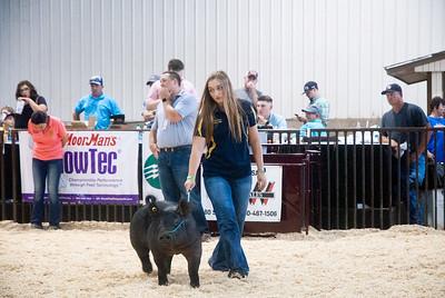 ok_state_fair_20190914_swine-19