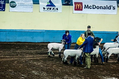 20190321_GRAND-DRIVE-SHEEP-024